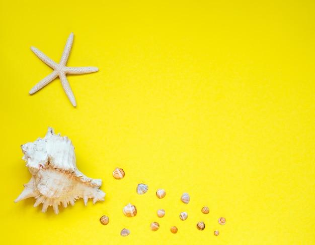 Selection of seashells and starfish arranged on yellow.