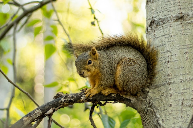 Selective closeup shot of a brown squirrel on a tree branch