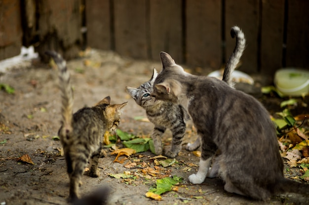Selective closeup shot of a white and brown cat with cute kittens near leaves