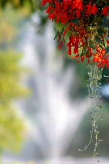 Selective focus background with flowers and fountain