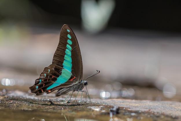 セレクティブフォーカス自然の中で美しい共通bluebottleバタフライグループ