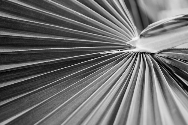 Selective focus black and white close up view of beautiful green palm leaf on natural background.