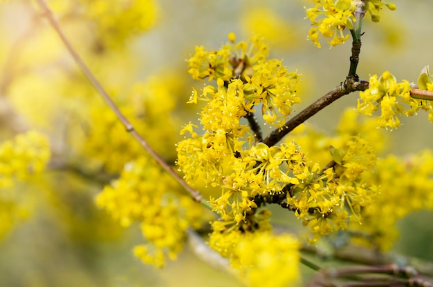 Selective focus of branches of spring flowers