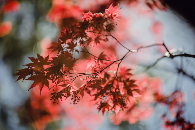 Messa a fuoco selettiva di foglie marroni