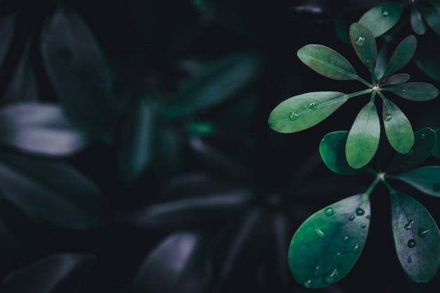 선택적 포커스 열 대 여름 녹색 잎 배경을 올랐다.