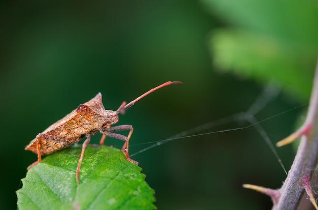 Selective focus closeup of a bug on a leaf