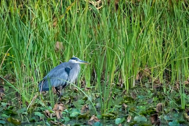 池の草の葉の下にとまる鳥の選択的な焦点のクローズアップ