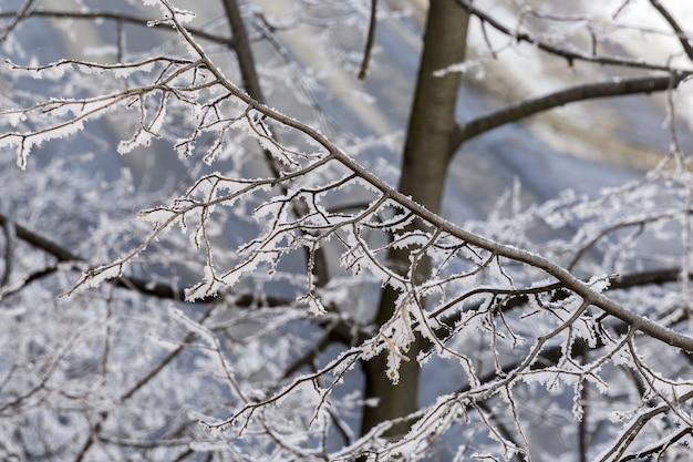 겨울 동안 나무의 서리로 덥은 줄기의 선택적 초점 근접 촬영