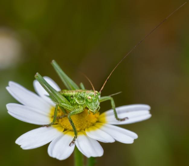 데이지 꽃에 녹색의 선택적 초점 근접 촬영