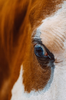 Selective focus closeup shot of an eye of a beautiful horse