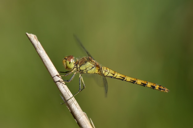 Selective focus closeup shot of a green dragonfly perched on a branch