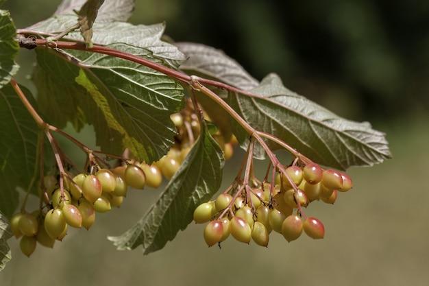 いくつかの黄色いベリーと木の枝の選択的な焦点のクローズアップショット