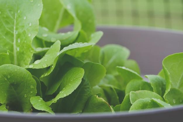緑の葉の朝露の選択的な焦点のクローズアップショット