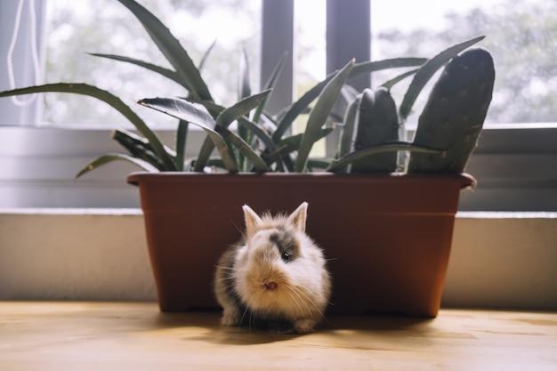 Un fuoco selettivo di un simpatico coniglietto colorato marrone e nero sul davanzale della finestra