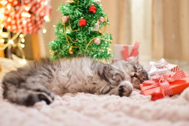 セレクティブフォーカスかわいい縞模様のふわふわ猫がクリスマスツリーの横で寝ていますクリスマスカード