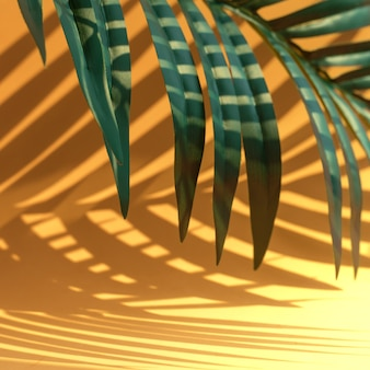 Selective focus of exotic coconut leaf with shadow on orange