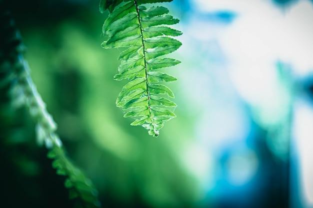 Selective focus green fern leaf