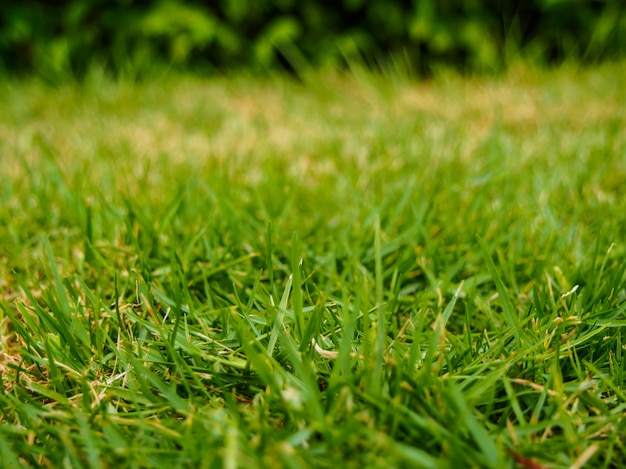 Selective focus of green grass in the meadow
