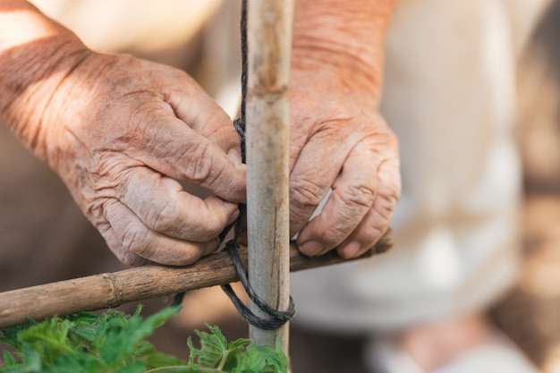 Selective focus on the hands of an elder man making a wooden structure to grown plants in a orchard