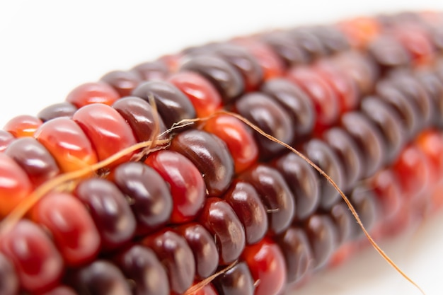 Selective focus on indian corn kernel.