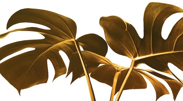Selective focus of monstera leaves leaf in gold color design ba