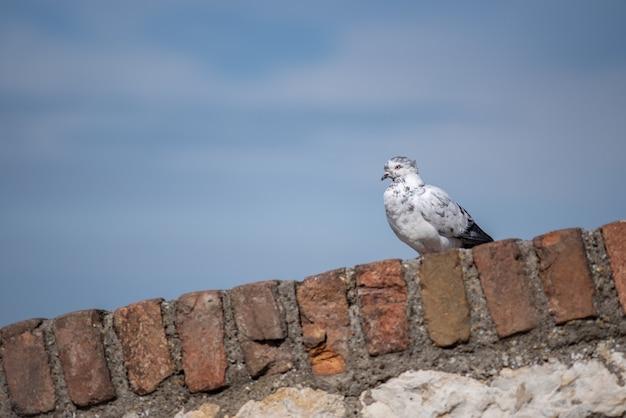 푸른 하늘을 배경으로 벽에 앉은 화려한 비둘기의 선택적 초점