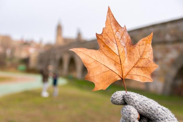 昼間に乾燥したカエデの葉を持っている手袋をはめた人の選択的な焦点