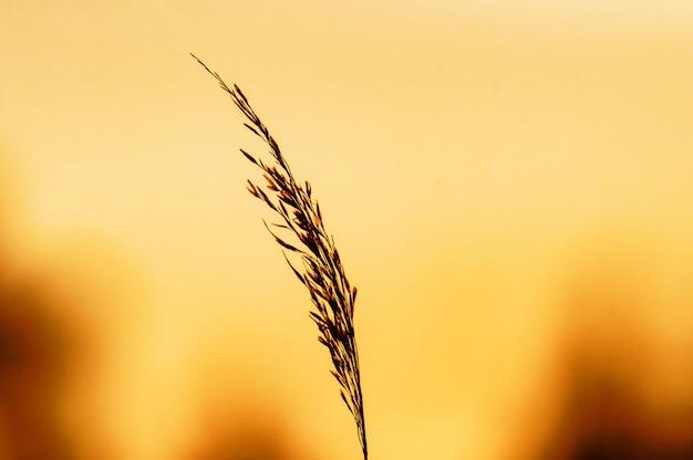 Выборочный фокус растения