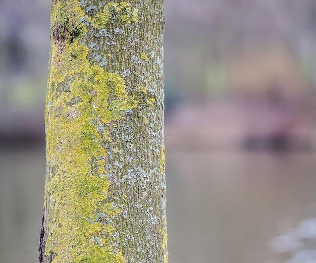 昼間の日光の下でコケに覆われた樹皮の選択的な焦点