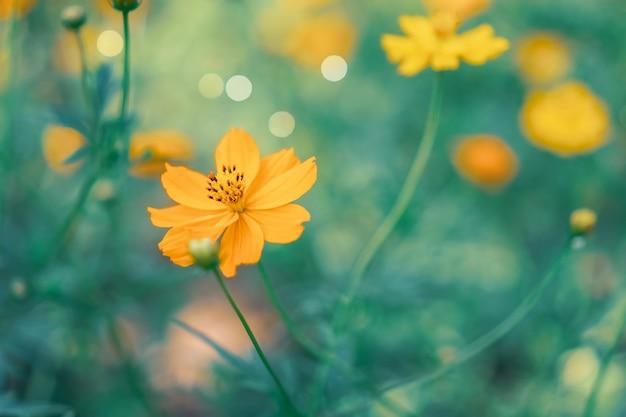 フィールドの背景を持つ美しい花の選択と集中。