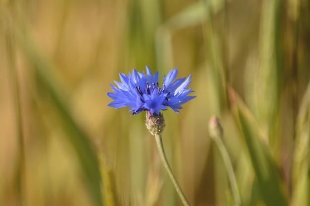フィールドに咲く小さな紫色の花の選択的な焦点
