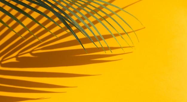 色の背景に影のあるエキゾチックなココナッツの葉の選択的な焦点