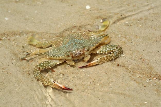 여름 아침에 해변에서 큰 게의 선택적 초점. 동물과 자연 배경 개념입니다.