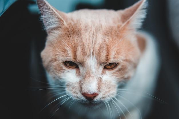 주황색과 흰색 줄무늬 고양이의 선택적 초점