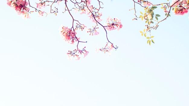 꽃에 분홍색 꽃의 선택적 초점입니다. 최고의 봄 배경