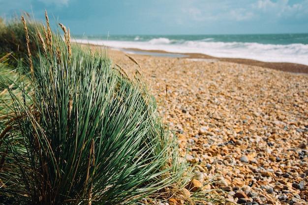 太陽の光の下で輝く草と波状の海のある岩のビーチの選択的な焦点