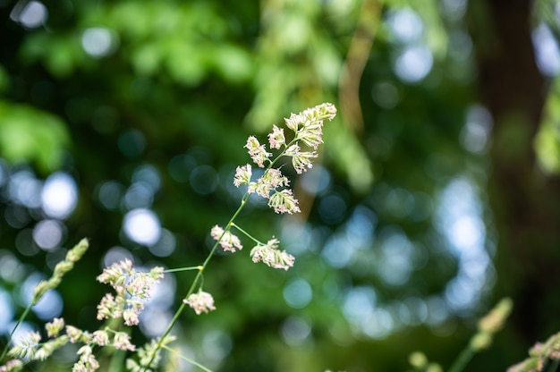 흐릿한 배경과 bokeh 조명으로 햇빛 아래 필드에 잔디의 선택적 초점