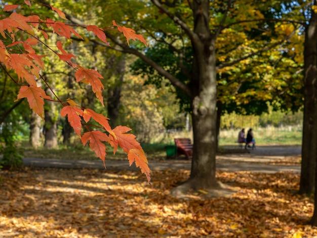 秋の都市公園の背景に赤い葉を持つ枝に選択的な焦点