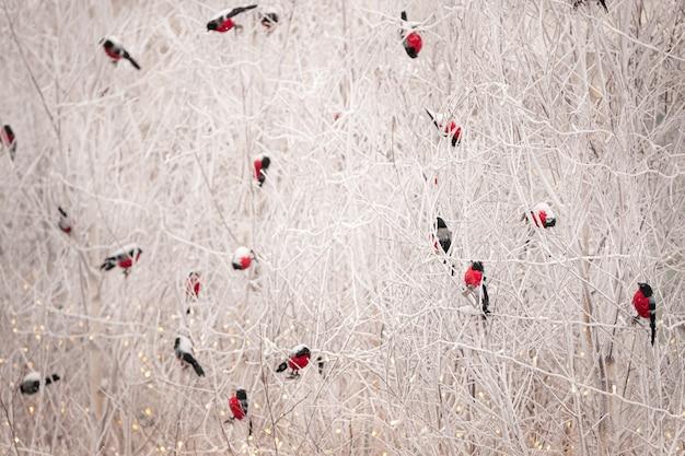 Селективный акцент на рождественских куклах, игрушках-снегирях, сидящих на заснеженных ветвях деревьев
