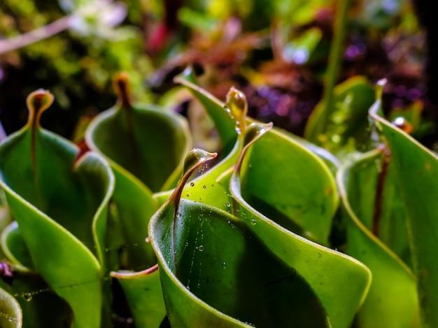 식물 잎에 응축된 물방울에 선택적 초점