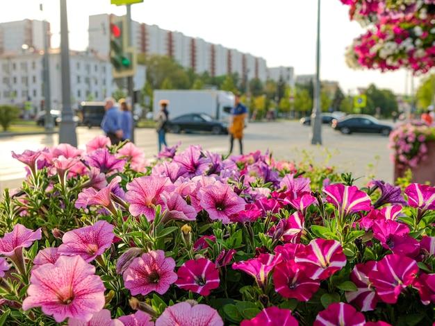 Выборочный фокус на фиолетовых цветках петунии в городе с размытыми людьми и автомобилями