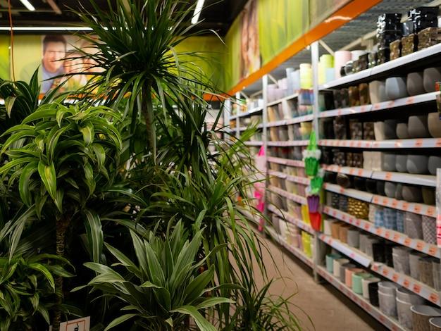 庭の店でさまざまなサイズと色の花のためのポットで棚を背景に装飾的なヤシの木の葉に選択的に焦点を当てます。ガーデニング製品の幅広い選択