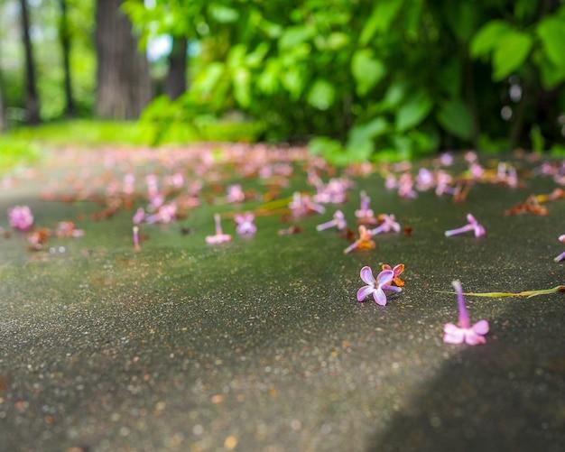 Селективный фокус на осыпавшихся нежными цветами сирени на мокром асфальте в солнечный день. конец цветения сирени в городе.