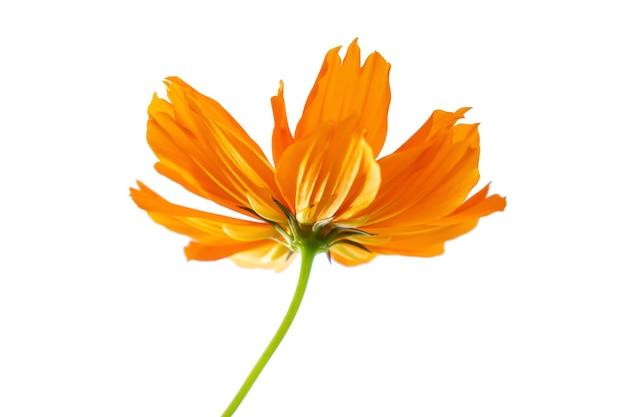 白い背景に分離されたセレクティブフォーカスオレンジの花。ファイルにはクリッピングパスが含まれているので作業が簡単です。