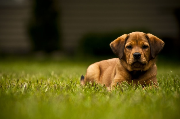 Selective focus shot of an adorable dog laying on a grassy field