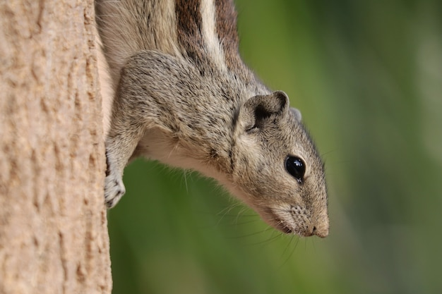 Selective focus shot of an adorable grey squirrel, outdoors during daylight