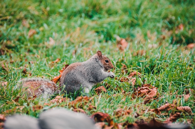 Selective focus shot of an adorable squirrel in the woods
