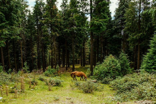 Selective focus shot of an amazing brown horse in the forest in basque country, spain
