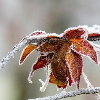 Selective focus shot of beautiful autumn leaves covered with frost with a blurry background