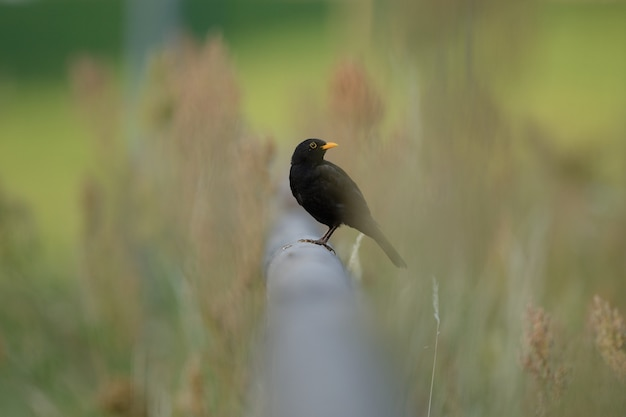 Selective focus shot of a beautiful bird sitting on a pipe among the green grass